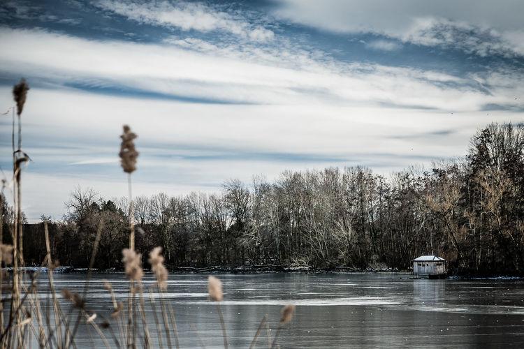 View of ducks in lake against sky