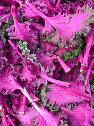 Farmers Market Fresh Produce Nature Backgrounds Cabbage Close-up Food Food And Drink Freshness Full Frame Growth Healthy Eating Kale Multi Colored Nature No People Organic Pattern Pink Color Plant Plant Part Purple Vegetable Vegetarian Food Wellbeing