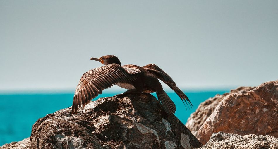 Low angle view of bird perching on rock by sea against clear sky