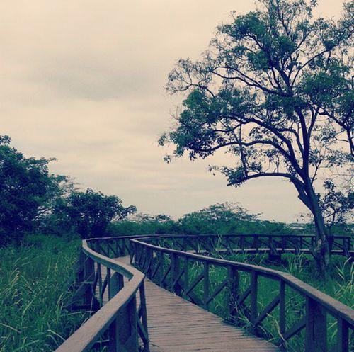 Isla Santay. Bosque Manglar. Durán Ecuador