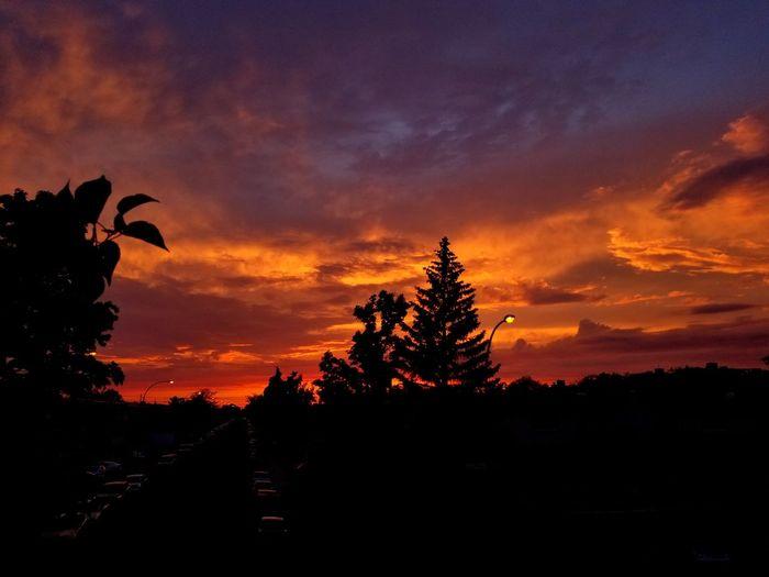 Wonderful Colorful Sky Red Orange Yellow Sky Wonderful Sunset 🌇 Tree Sunset Tree Area Silhouette Sky Landscape Pine Tree Pine Cone