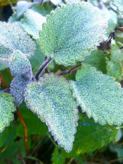 Leaf Plant Plant Part Growth Close-up Green Color Cold Temperature