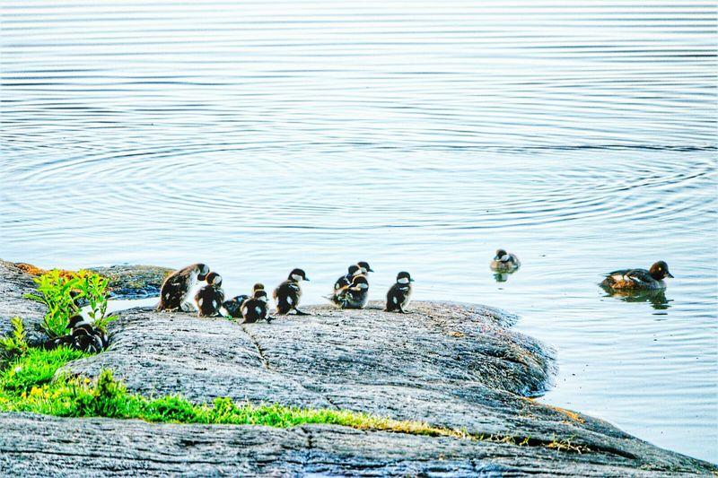 Think Positive Nature Littoisten Järvi Sunrise_sunsets_aroundworld Bird Rocks And Water