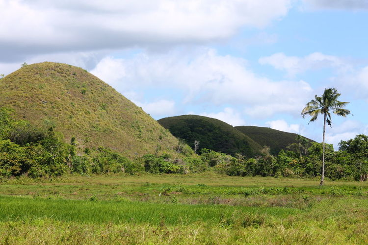 Carmen, Bohol Philippines Hills Green Color Minimalism Lone Coconut Tree Travel Destinations Nature Outdoors Beauty In Nature Copy Space Rural Landscape Green Hills Cloud - Sky Tree Sky No People Mountain Day Simple Life Rural Life Purist No Edit No Filter Purist In Photography
