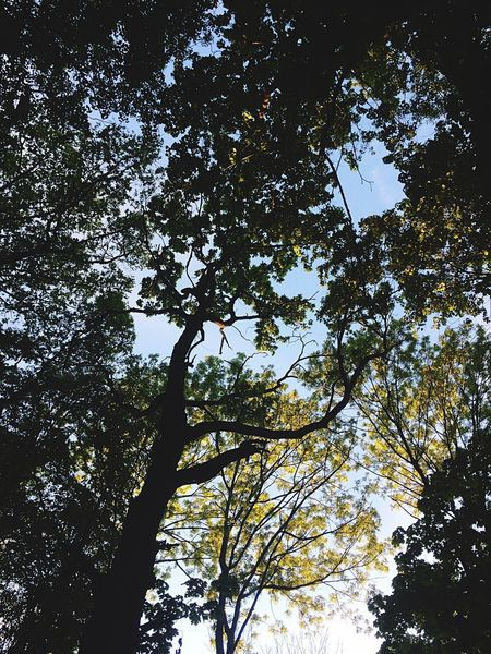 Tree Low Angle View Branch Growth Nature Outdoors Day No People Tree Trunk Forest Beauty In Nature Sky