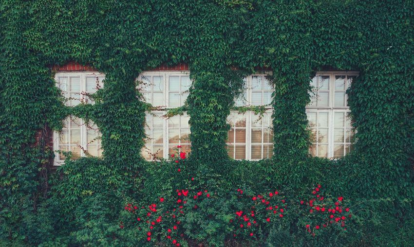 Closed windows amidst plants