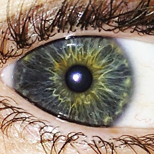 Grey Eyes Grey Green Starburst Iris Irish Pupil Extreme Close-up Extreme Close Up Human Eye Eyesight Eyelash Iris - Eye Sensory Perception Human Body Part Eyeball Close-up Reflection Macro People One Person Natural Beauty Beauty In Ordinary Things Green Color Maximum Closeness