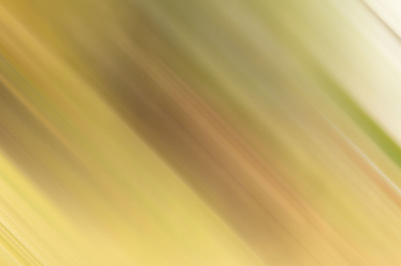 Close-up of blurred background