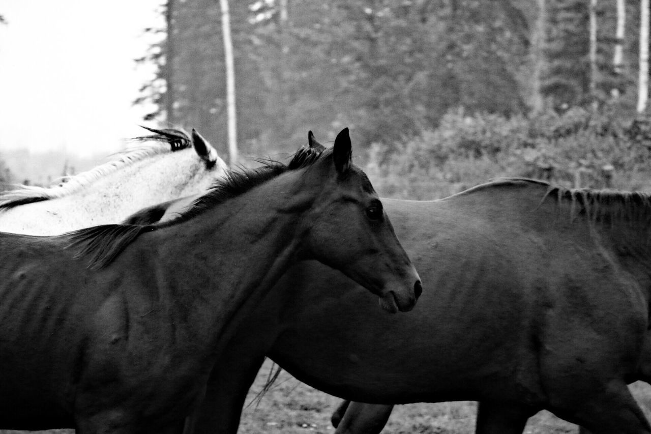 TWO HORSES IN THE RANCH