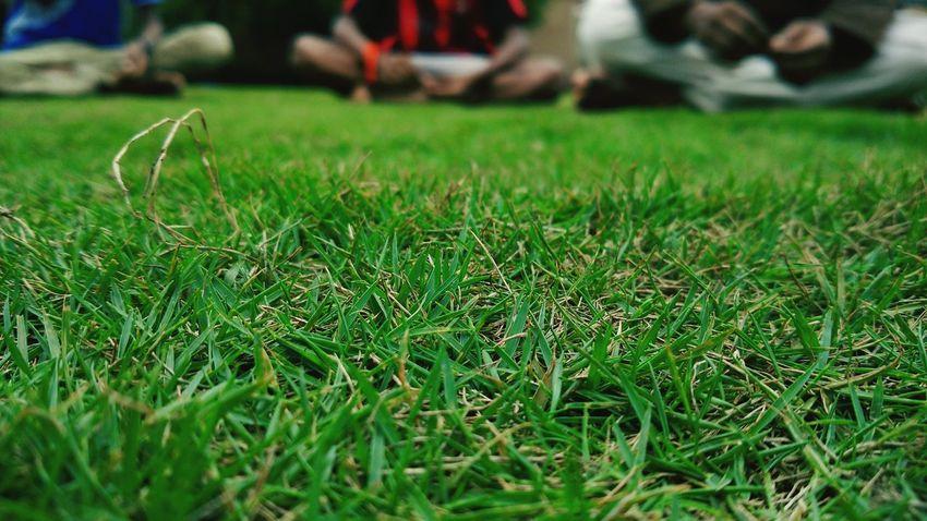 Macro shot of Green Grass looking Beautiful...relaxing Nature