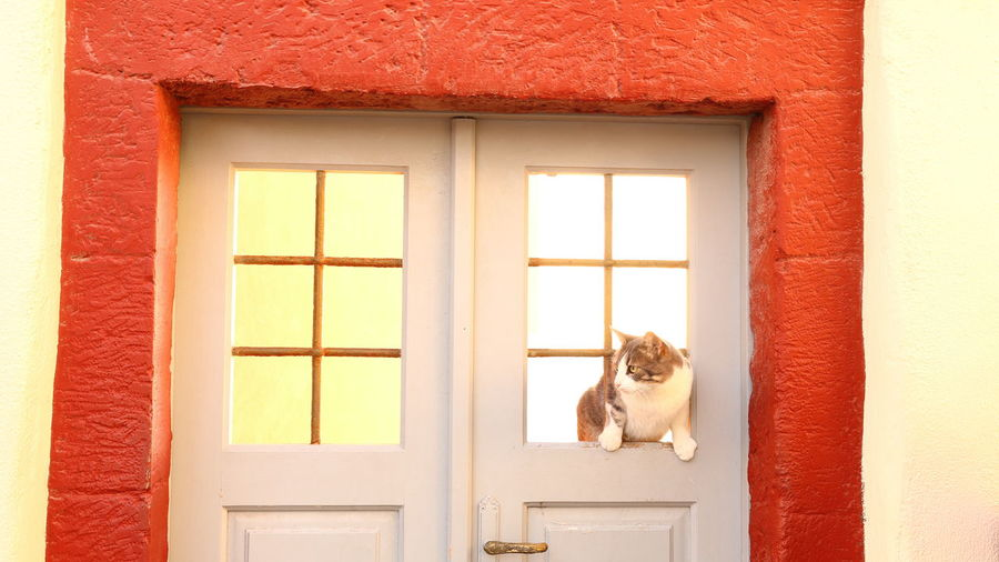 View of a dog looking through window
