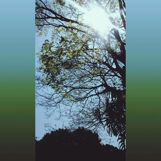 Primaverando ❤ Spring Verde Natureza