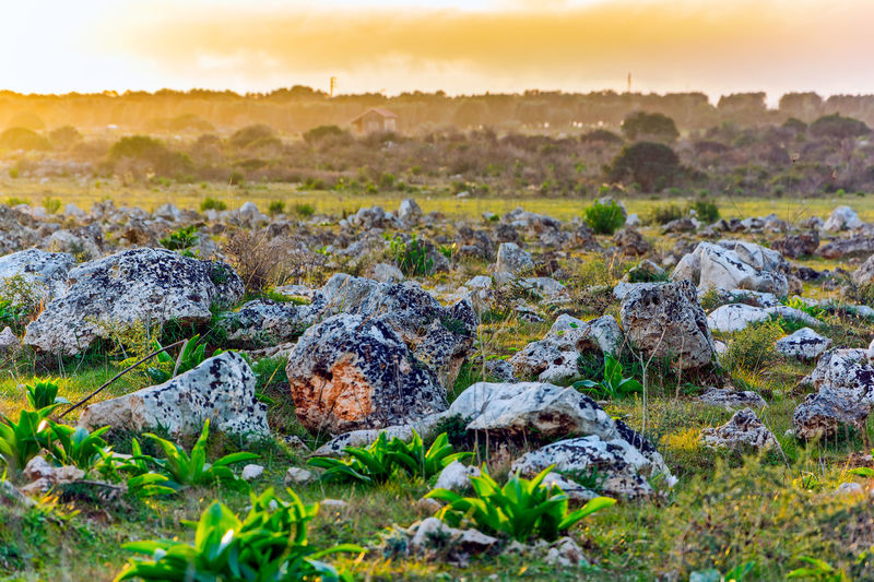 Beauty In Nature Environment Grass Land Landscape Nature No People Outdoors Plant Rock Rock - Object Scenics - Nature Selective Focus Semi-arid Sky Solid Sun Sunlight Sunset Tranquility Tree