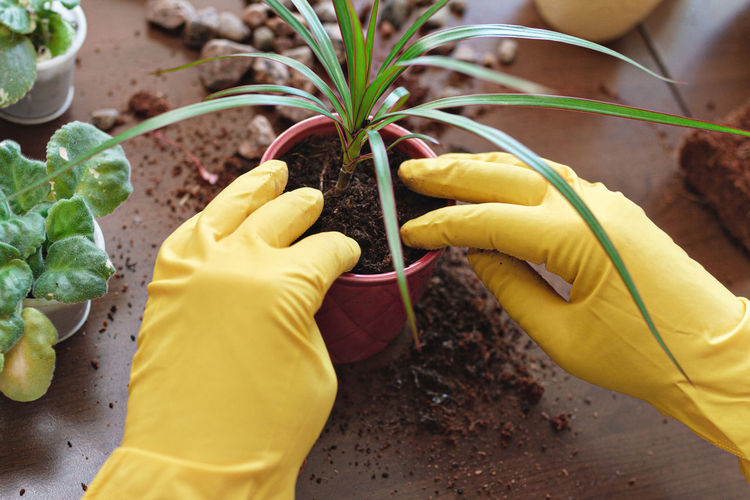 Cropped image of man planting plant into pot on table