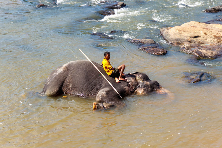 High angle view of elephant in sea