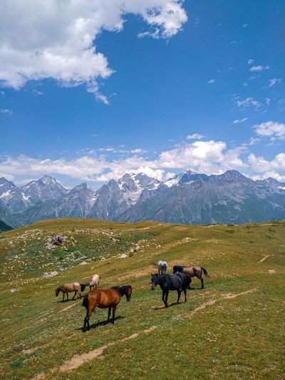 Horses on field against mountain range