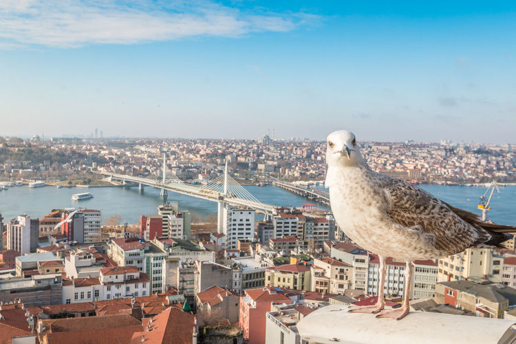 Istanbul Istanbul Turkey Architecture Building Exterior Built Structure City Cityscape Sky Water Bird Animal Themes Building Nature Residential District Day Animal No People Animals In The Wild Seagull Vertebrate Outdoors