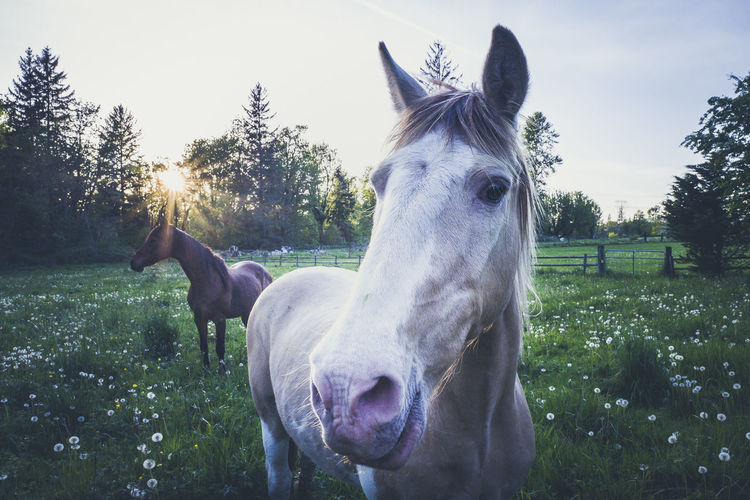 Horses in a sunset Animal Animal Head  Animal Themes Animal Wildlife Day Domestic Domestic Animals Field Grass Herbivorous Horse Land Livestock Mammal Nature No People One Animal Outdoors Pets Plant Ranch Sky Tree Vertebrate