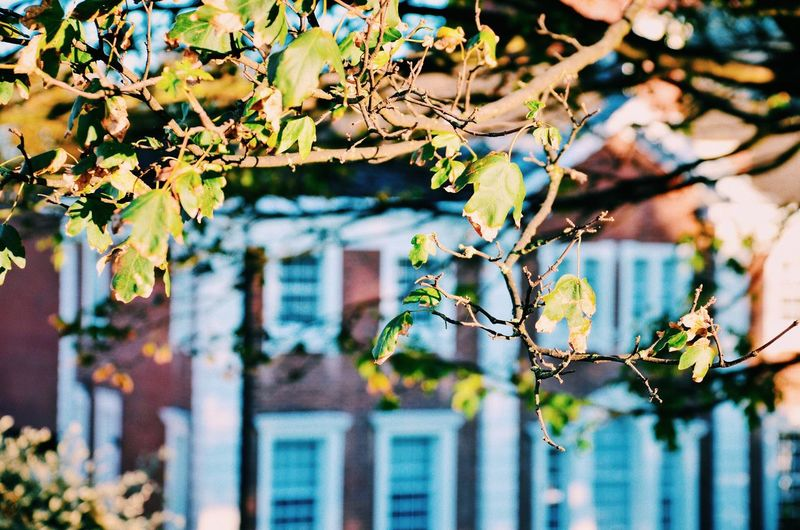 Autumn in Norwich Plant Part Nature Sunlight Branch Leaf Beauty In Nature Tree Building Exterior No People Day Built Structure Architecture EyeEm Selects Leaves British Architecture Warm Colors Norwich Norfolk Focus On Foreground Building Close-up Plant Selective Focus