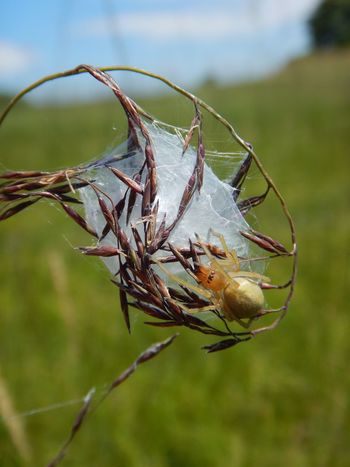 Close-up Dead Plant Focus On Foreground Fragility Nature Plant Spider Spider Web Tranquility Twig