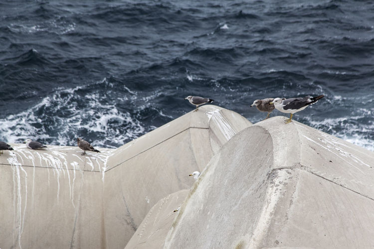 Birds perching on tetrapods against sea