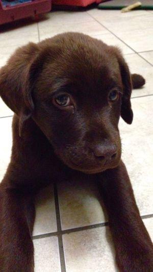 Thelma Pets Portrait Dog Looking At Camera Close-up