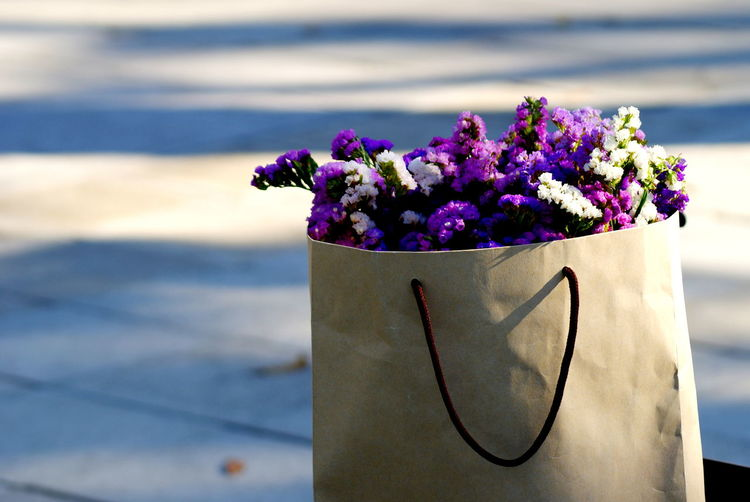 Close-up of purple flowering plant in pot