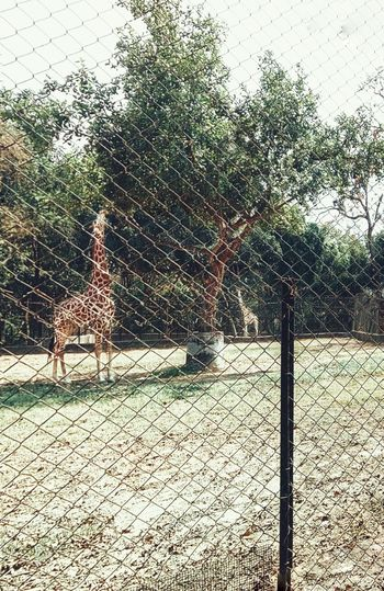 View of fence in zoo