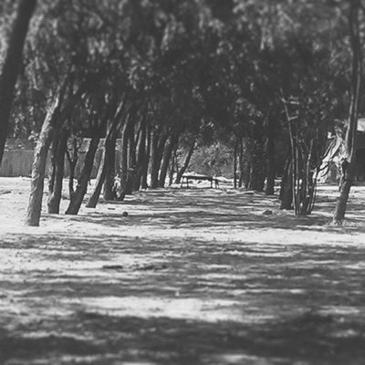 Pologround Photography Vscocam VSCO Bw Follow4follow Like4like Picoftheday Instapic Instagood Instabest Hashtags Hashtagfever