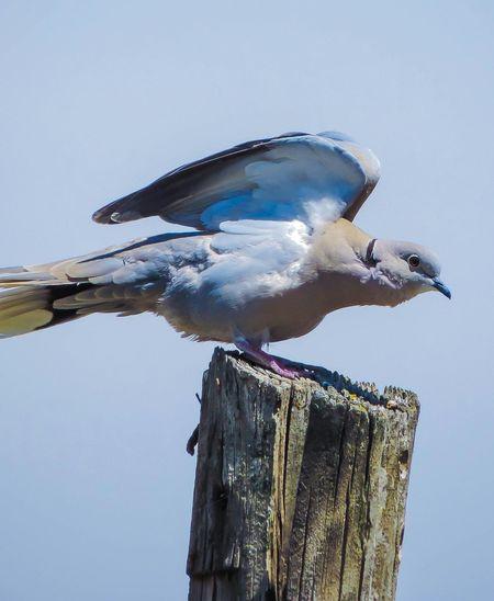 Birds Hello World Animals Dove Nature Goodnight✌ People ..