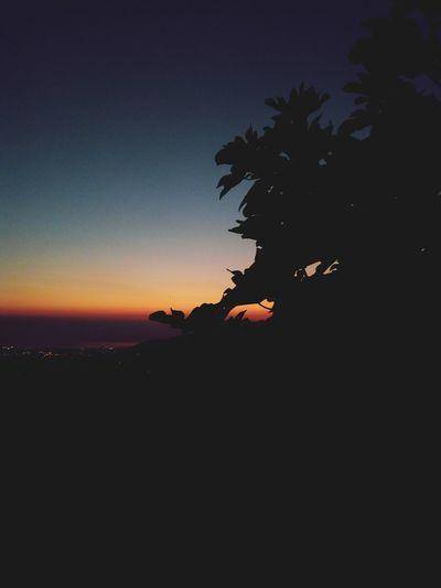 Tree Astronomy Sunset Palm Tree Silhouette Sky