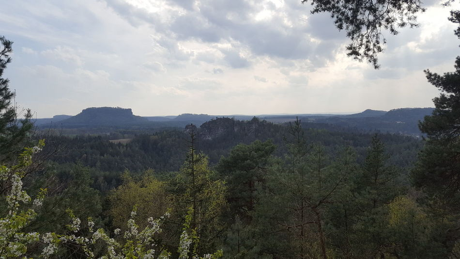 Beauty In Nature Day Forest Growth Landscape Lilienstein Mountain National Park Nature No People Outdoors Saxon Switzerland Sky Sächischeschweiz Tranquility Tree