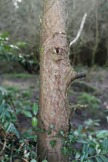 Tree Tree Trunk Nature Focus On Foreground Day Animals In The Wild Animal Themes One Animal Outdoors No People Forest Animal Wildlife Beauty In Nature Close-up Woodpecker Perching Leopard Face Raw Photography No Edit, No Filter, Just Photography EyeEmNewHere