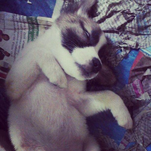 หนูง่วงมากเลย เมื่อคืนหนูจัดหนัก หนูฝันว่าเป็นกระต่าย