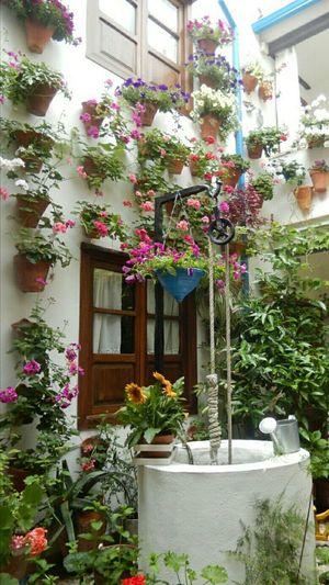 Patios De Córdoba Flower Plant Traditional Architecture Greenhouse
