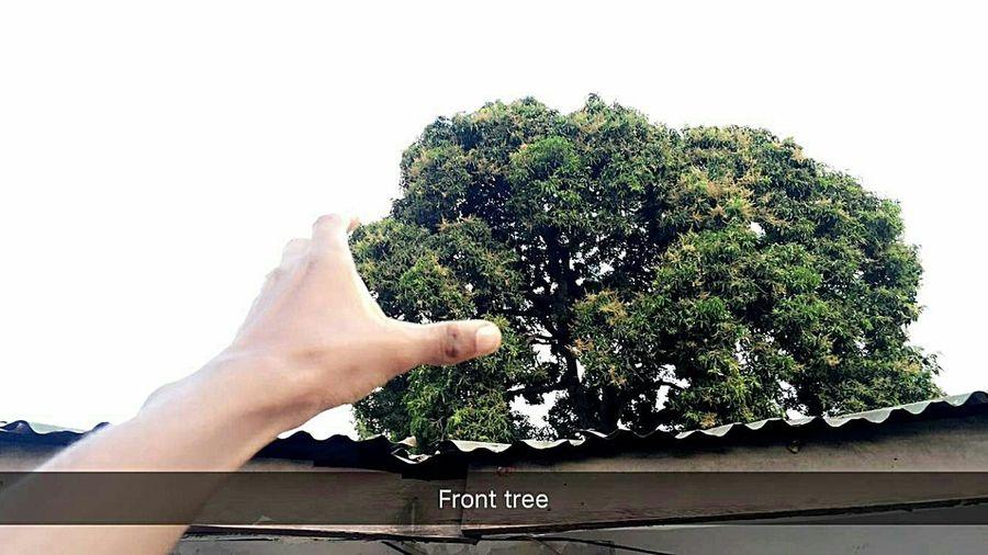 Art tree First Eyeem Photo Daressalaam Hello World Tanzania Enjoying Life Photooftheday Tree Likeforlike #likemyphoto #qlikemyphotos #like4like #likemypic #likeback #ilikeback #10likes #50likes #100likes #20likes #likere