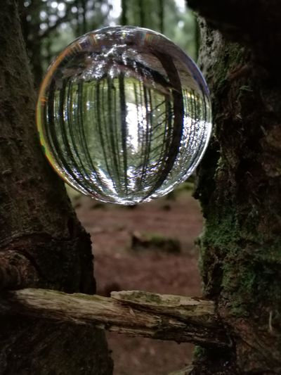 upside down world #trees And Light Forest Reflection Disco Ball Shiny