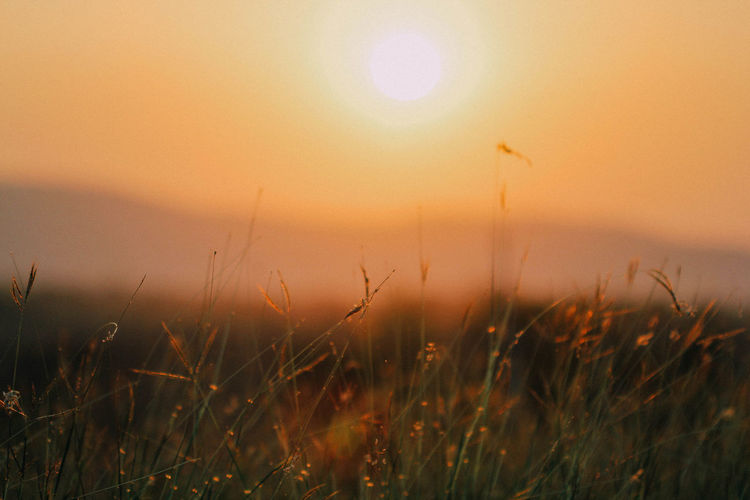 Beauty In Nature Environment Field Grass Growth Land Landscape Nature No People Outdoors Scenics - Nature Selective Focus Sky Sun Sunlight Sunset