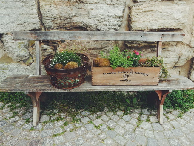 Old wooden bench Basket Beauty In Nature Bench Benches Close-up Day Flower Front Or Back Yard Green Color Growing Growth Idyllic Nature No People Outdoors Plant Romantic Rustic Rustic Style Wood - Material Wooden Fresh On Eyeem