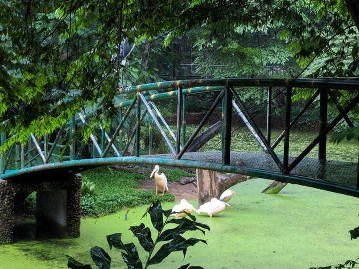 Wet Nature Park