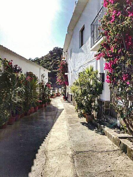 Spain ✈️🇪🇸 Andalucia Spain Casa House Pueblo EyeEm Gallery Eye4photography  EyeEm Best Shots Alpujarras Alpujarra Andalucía Andaluciaviva Flowers,Plants & Garden Eye Flower Flowers Flor Flowers, Nature And Beauty