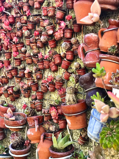Jardin miniature d'un facteur Cheval local Choice Variation Large Group Of Objects Potted Plant Plant Abundance No People High Angle View Freshness Spice For Sale Day Food Vegetable Collection Retail  Food And Drink Market Container Arrangement Outdoors Herb Flower Pot