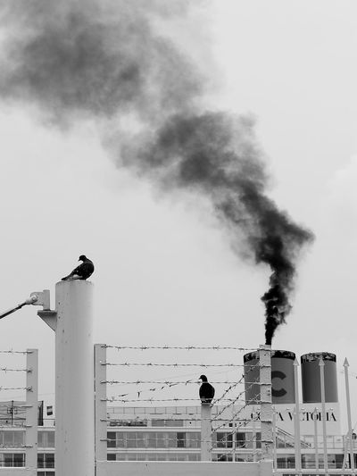 City Pollution In My World Singapore Animal Themes Black And White City Day Monochrome No People Outdoors Pigeon Pollutant Emission Polluted Singapore City Sky Smoke Stack Streetphotography