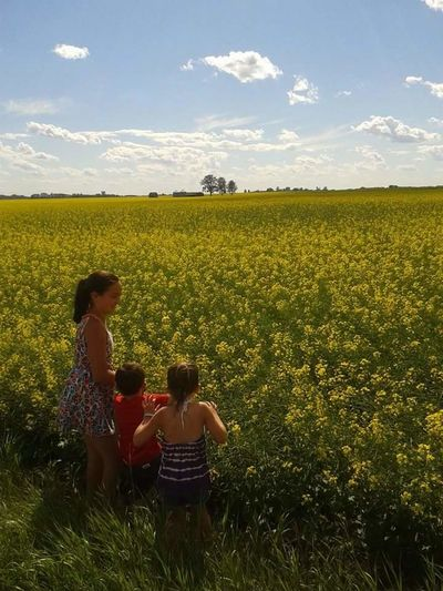 Field Yellow Field Summer Afternoon Kids In Bright Field Essence Of Summer Sunny Day Yellow Flowers Blue Sky Rural Alberta Highway 627 Samsung Galaxy S3