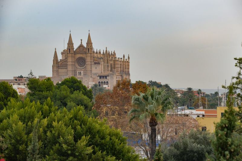 Palma cathedral Cathedral Church Architecture Built Structure Tree Building Exterior No People Day Outdoors