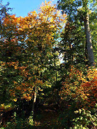 Herbstwald Nature Natural Beauty Forest Trees Fichtelgebirge