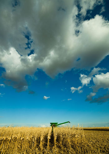 Autumn Big Sky Farmer Fuel South Dakota Agriculture Cloud - Sky Combine Combine Harvester Corn Crop  Energy Ethanol Farm Farming Field Food Grain Harvest Landscape Rural Scene Sky