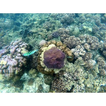 Life Is A Beach Snorkeling Coral Reefs Diving
