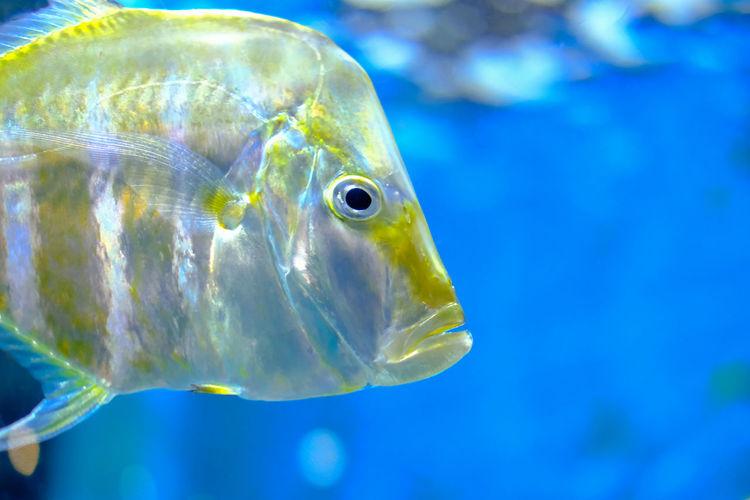 Fish are