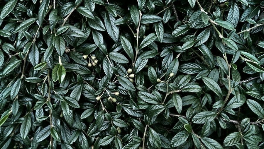 Green foliage background Nature Nature_collection Outdoor Photography Textures And Surfaces Filtered Image Plants And Flowers